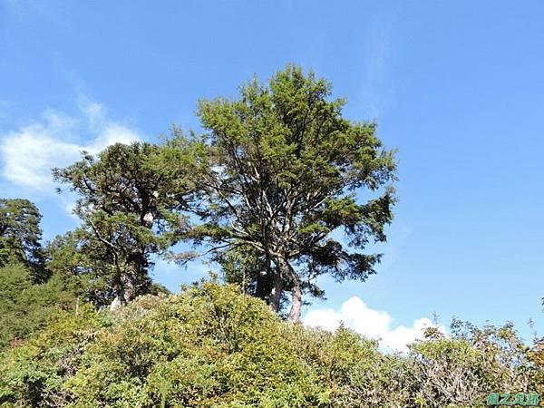 羅葉尾山20140907(37)
