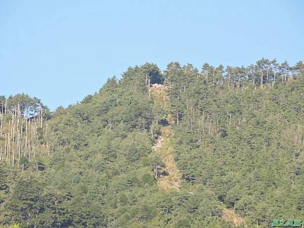 羅葉尾山20140907(44)