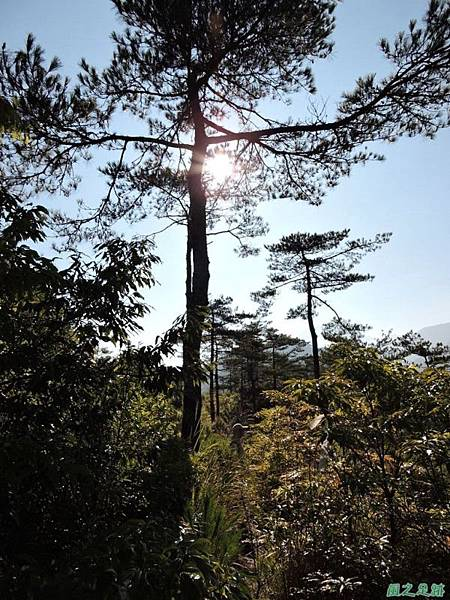 羅葉尾山20140907(50)