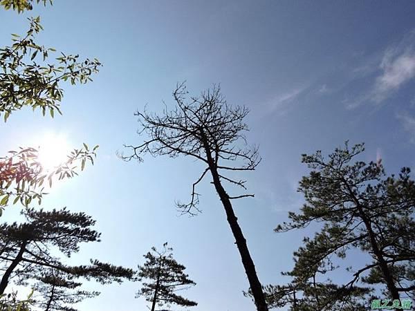 羅葉尾山20140907(51)