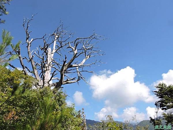 羅葉尾山20140907(74)