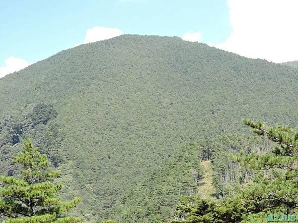 羅葉尾山20140907(109)