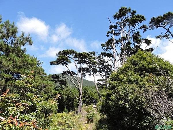 羅葉尾山20140907(114)