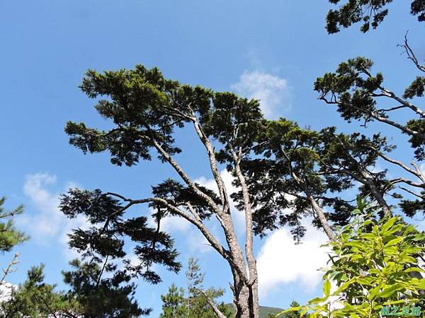 羅葉尾山20140907(116)
