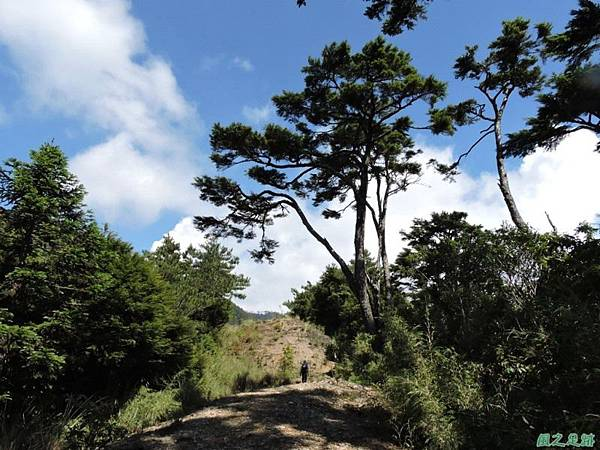 羅葉尾山20140907(117)