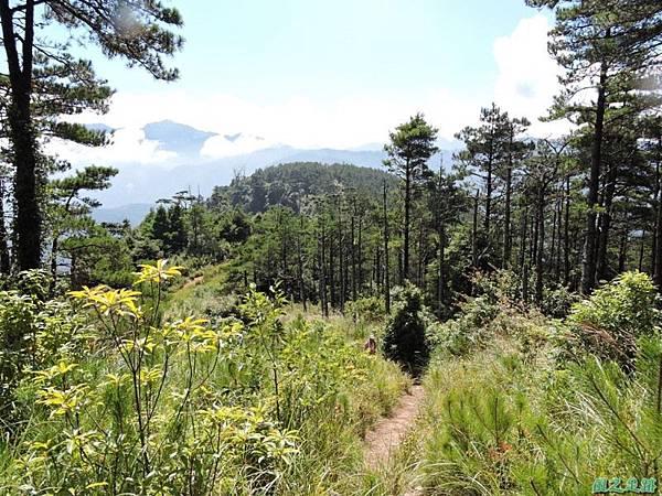 羅葉尾山20140907(125)