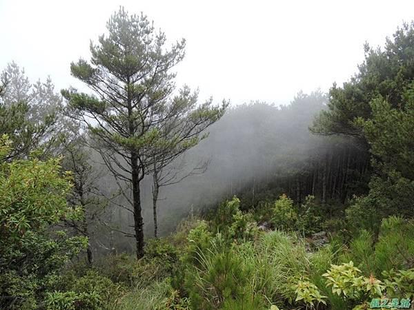 羅葉尾山20140907(157)