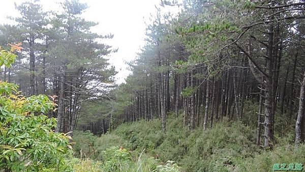 羅葉尾山20140907(163)