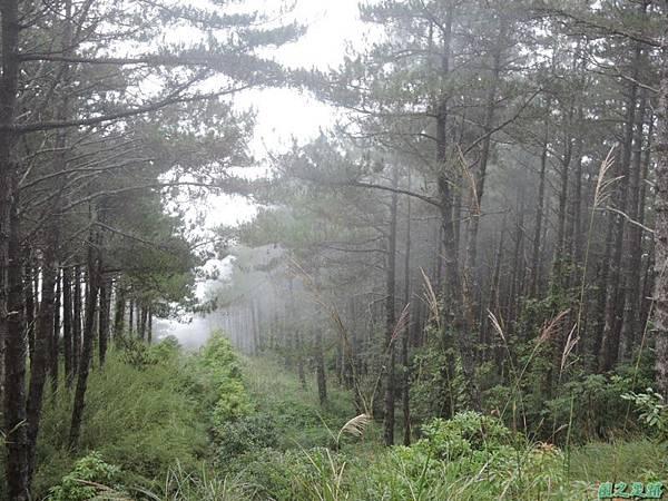 羅葉尾山20140907(166)