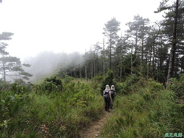 羅葉尾山20140907(170)