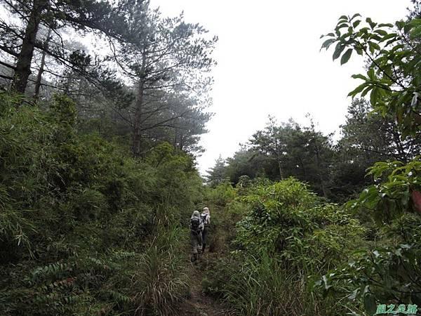 羅葉尾山20140907(174)