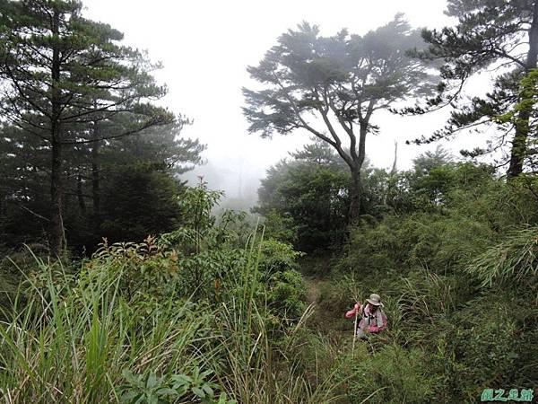 羅葉尾山20140907(176)