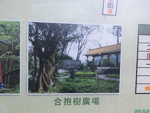 秀巒公園珍貴樹木20141018(10)