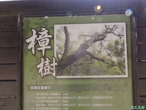 秀巒公園珍貴樹木20141018(12)