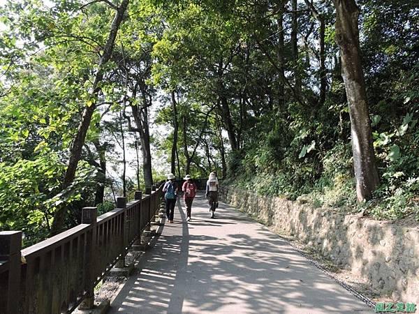 秀巒公園珍貴樹木20141018(14)