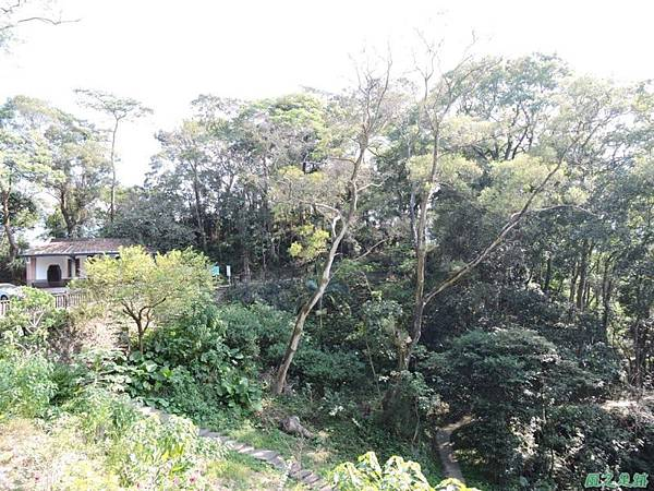 秀巒公園珍貴樹木20141018(15)