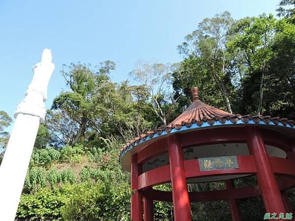 秀巒公園珍貴樹木20141018(16)