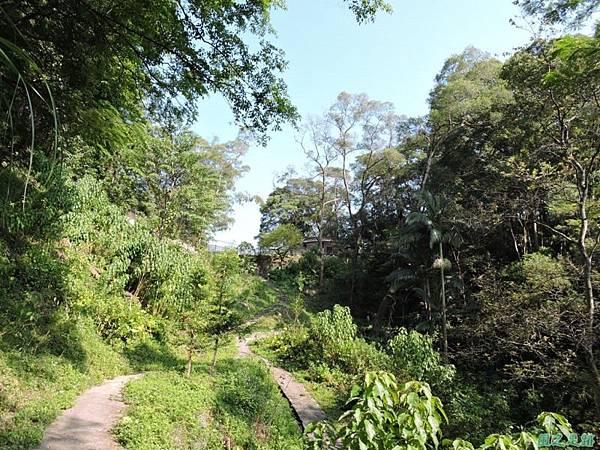 秀巒公園珍貴樹木20141018(22)