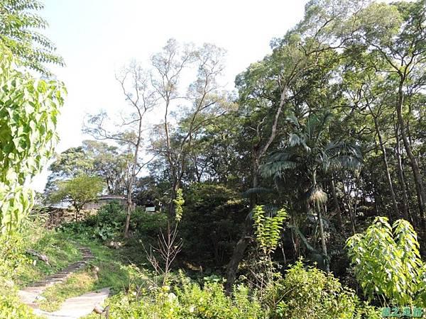 秀巒公園珍貴樹木20141018(24)