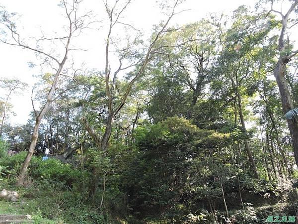 秀巒公園珍貴樹木20141018(25)