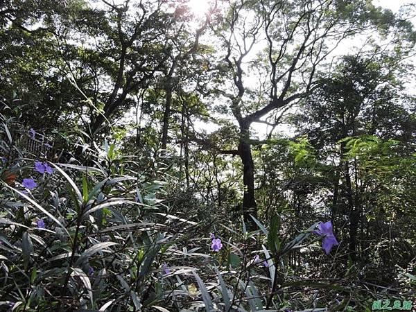 秀巒公園珍貴樹木20141018(27)