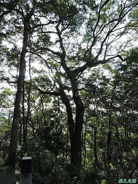 秀巒公園珍貴樹木20141018(33)