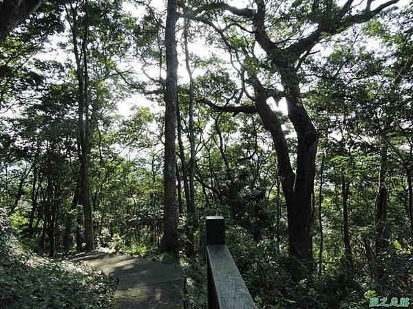 秀巒公園珍貴樹木20141018(35)
