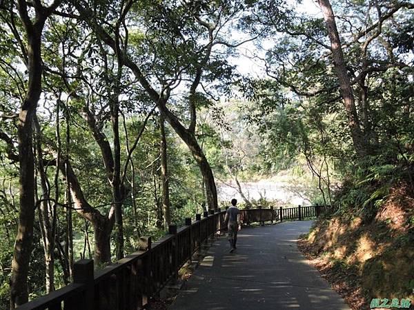 秀巒公園珍貴樹木20141018(36)