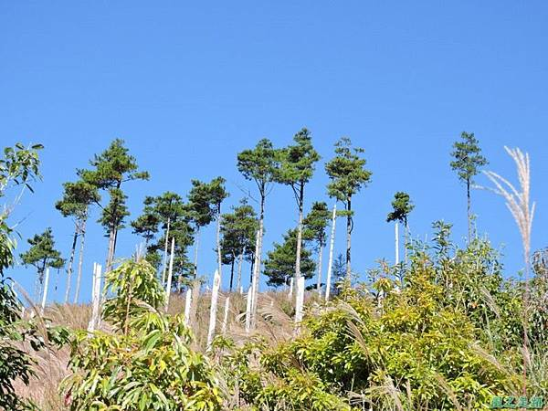 馬武佐野郡山20141102(28)