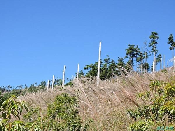 馬武佐野郡山20141102(29)