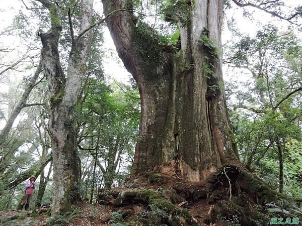 馬武佐野郡山20141102(137)