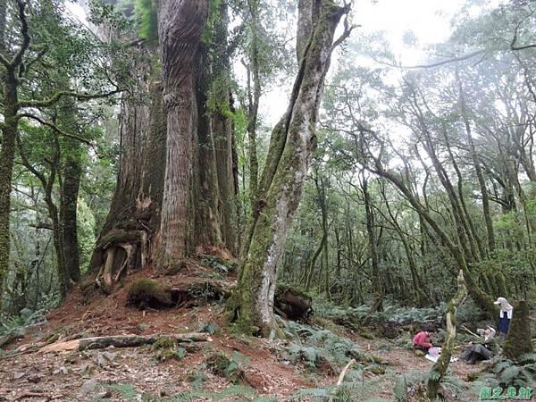 馬武佐野郡山20141102(139)