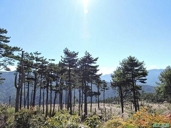 馬武佐野郡山20141102(90)