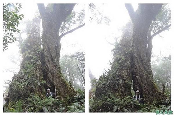 馬武佐野郡山20141102(146)