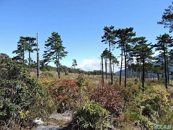馬武佐野郡山20141102(92)