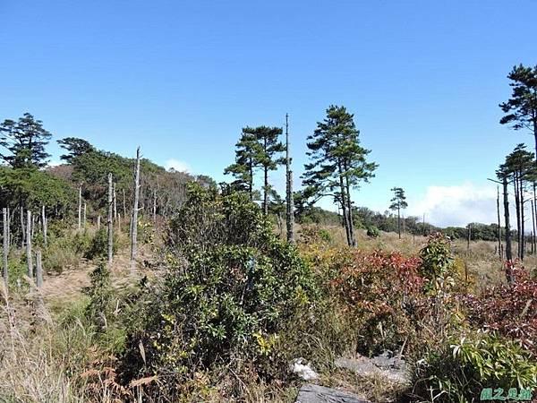 馬武佐野郡山20141102(93)