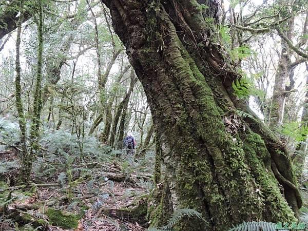 馬武佐野郡山20141102(158)