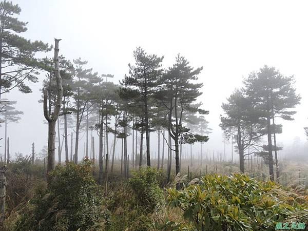 馬武佐野郡山20141102(162)