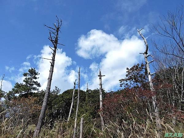 馬武佐野郡山20141102(105)