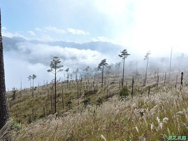 馬武佐野郡山20141102(167)