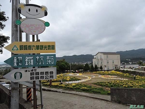 九湖杭菊20141117(10)