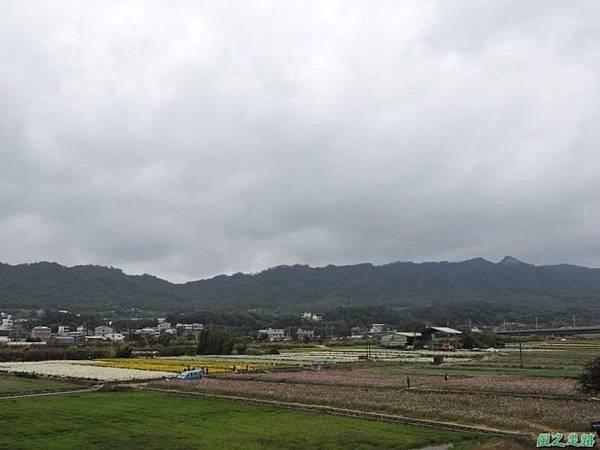 九湖杭菊20141117(20)