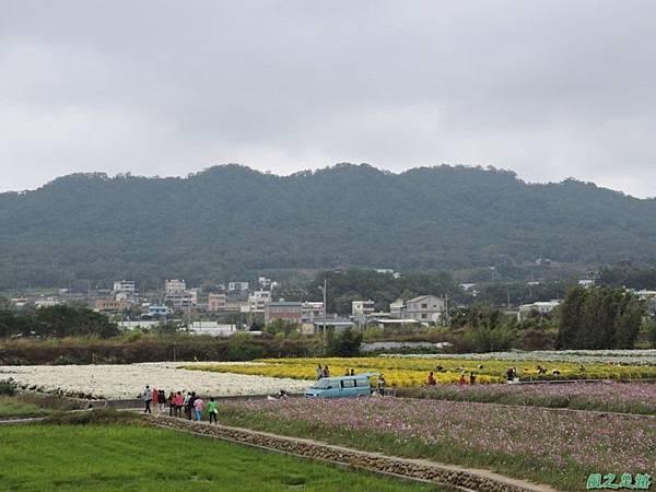 九湖杭菊20141117(34)