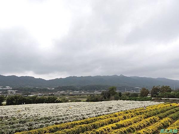 九湖杭菊20141117(44)