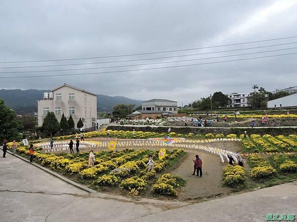 九湖杭菊20141117(45)