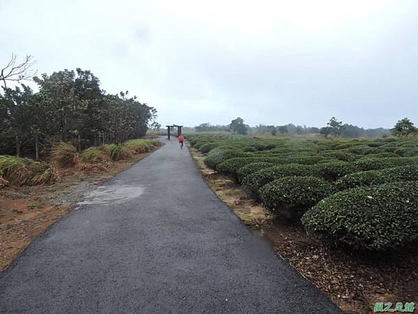 銅鑼自行車道20141117(44)