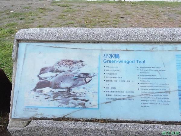 華江雁鴨自然公園2014122(3)