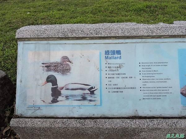 華江雁鴨自然公園2014122(10)