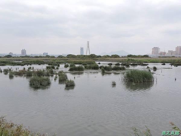 華江雁鴨自然公園2014122(29)
