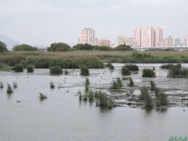 華江雁鴨自然公園2014122(52)